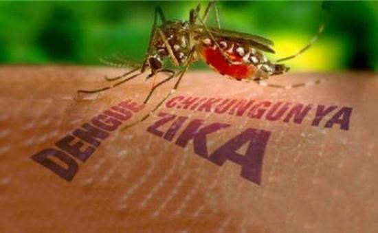 WHO sẽ triệu tập cuộc họp khẩn về Zika