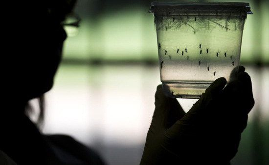 Ghi nhận nhiều trường hợp nhiễm virus Zika tại châu Âu