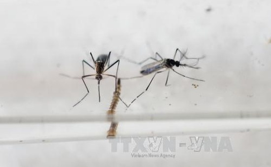 Sanofi nghiên cứu vaccine phòng chống virus Zika