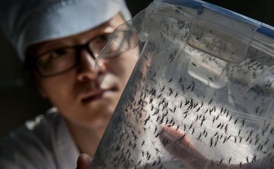 Cảnh báo nguy cơ virus Zika lan rộng tại châu Á - Thái Bình Dương