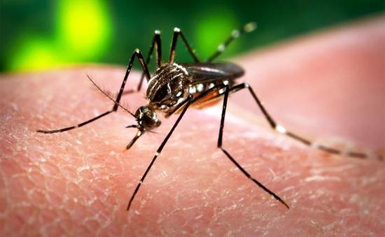 Phát hiện trường hợp nhiễm Zika thứ 2 tại Hàn Quốc