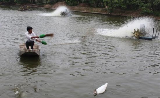 """Giá cá tra giống tại ĐBSCL """"hạ nhiệt"""""""