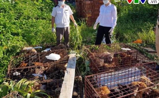 Nghệ An tiêu hủy 72 con chó không có giấy tờ kiểm dịch