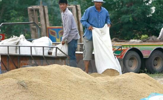 Năm 2017, Thái Lan xuất khẩu gạo dự đoán vượt 10 triệu tấn