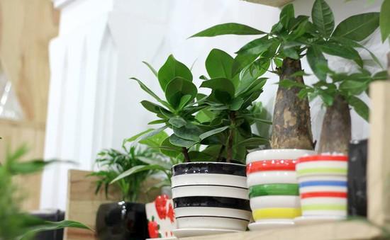 Tự trồng hoa và cây cảnh chơi Tết tại nhà