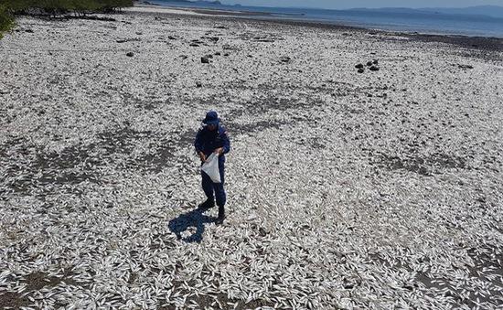 Cá chết trắng bờ biển của Costa Rica