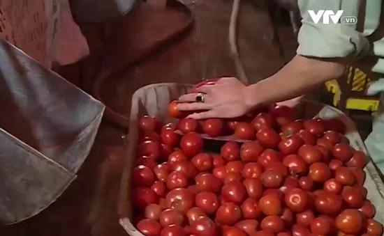 Rau quả rớt giá thê thảm, nông dân Hưng Yên điêu đứng