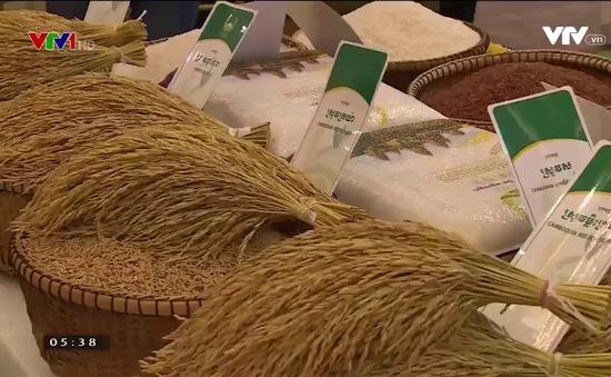 Kinh nghiệm xây dựng thương hiệu gạo của Campuchia