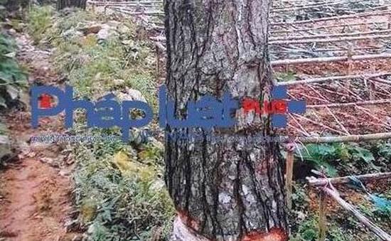 Thủ tướng yêu cầu làm rõ vụ phá rừng trồng su su ở Vĩnh Phúc