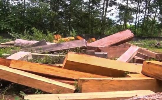 Gia Lai xử lý 285 vụ vi phạm Luật Bảo vệ và Phát triển rừng