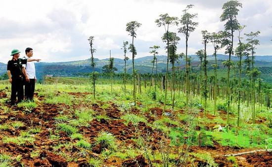 Thu hồi 12ha đất quốc phòng tại Đắk Nông