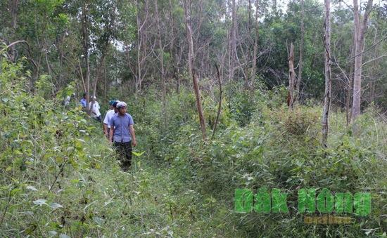 """Đăk Nông """"mất trắng"""" 121ha rừng theo Quyết định 147"""