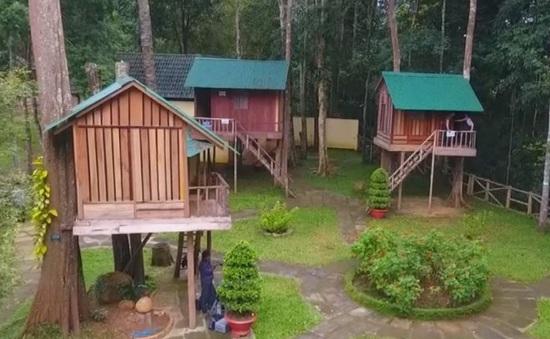 Độc đáo nhà nghỉ trên cây tại Lâm Đồng
