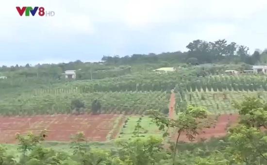 Dự án ổn định dân di cư tự do tại Đắk Nông chưa hiệu quả