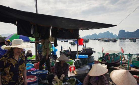 Ghé thăm cảng cá yên bình ở vịnh Bái Tử Long