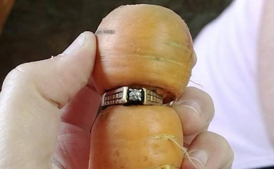 Tìm thấy nhẫn kim cương trên củ cà rốt sau... 13 năm