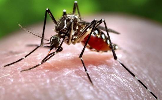 Muỗi thích đốt những người có nhóm máu nào?
