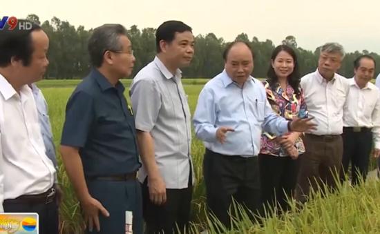 An Giang được thí điểm công nhận DN nông nghiệp công nghệ cao