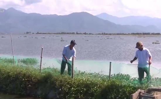 Thừa Thiên Huế chủ động bảo vệ thủy sản nuôi trồng mùa mưa lũ