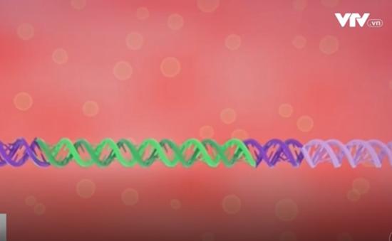 Thử nghiệm chỉnh sửa gen nhằm thay đổi ADN con người