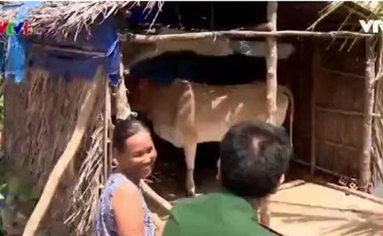 Bộ đội biên phòng Sóc Trăng hỗ trợ bò cho hộ Khmer nghèo