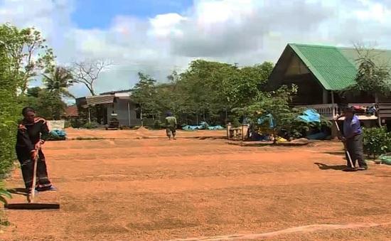 """Buôn làng vùng sâu tỉnh Đắk Lắk """"thay da, đổi thịt"""""""
