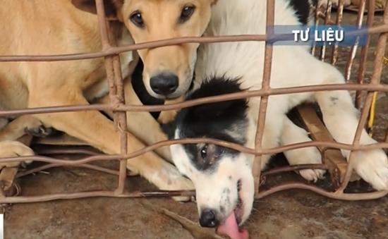 Thái Lan nỗ lực ngăn chặn nạn buôn lậu chó