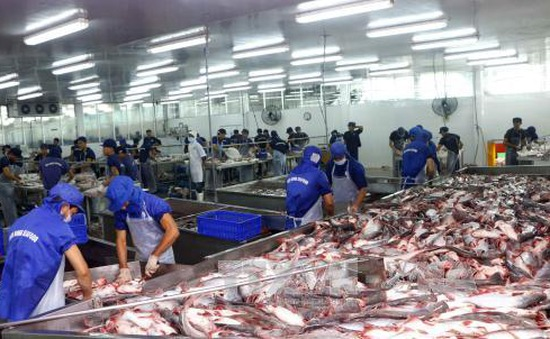"""VASEP phản đối Hoa Kỳ áp thuế """"vô lý"""" với cá tra phi lê đông lạnh Việt Nam"""