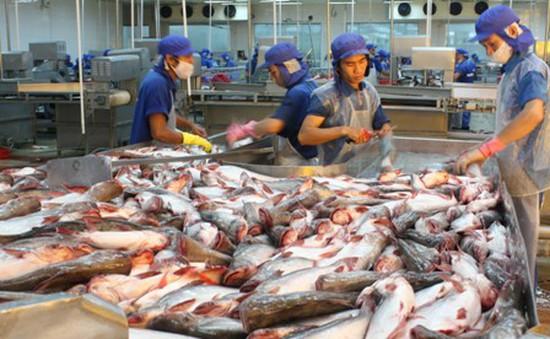 Xuất khẩu cá tra sang Mỹ và EU đang lao dốc