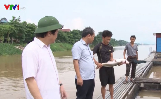 Thủy điện Hòa Bình xả lũ, dân nuôi cá Phú Thọ thiệt hại nặng
