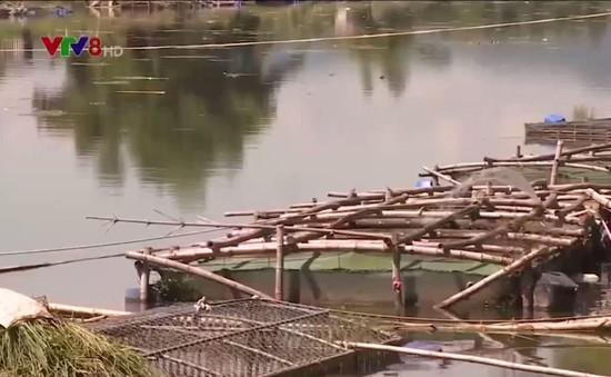 Hệ quả từ nuôi cá lồng ồ ạt trên sông, hồ ở Thừa Thiên Huế