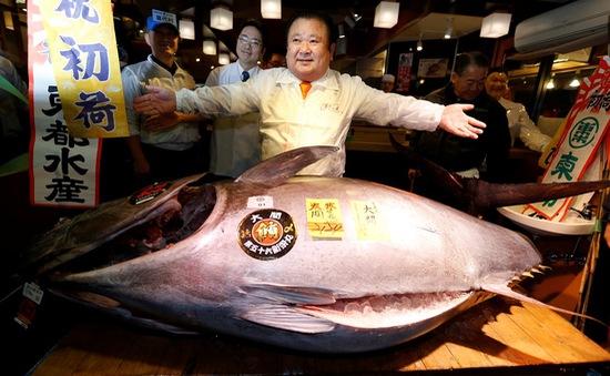 Cá ngừ Nhật Bản giá hơn 13 tỷ đồng trong phiên đấu giá đầu năm