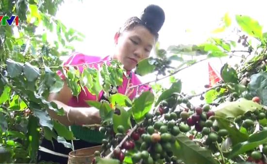 Xuất khẩu cà phê đạt 3,3 tỷ USD