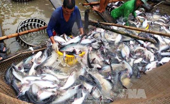 VASEP: Kiểm soát chặt chất lượng cá tra xuất khẩu sang Trung Quốc
