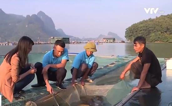 Đưa cá đặc sản miền Trung về nhân giống tại sông Đà