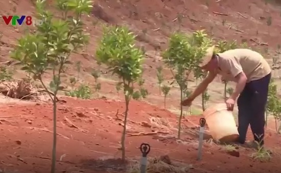 Nông dân thu nhập hàng tỷ đồng từ cây cam sành