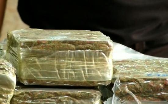 Thái Lan thu giữ gần 500 kg cần sa