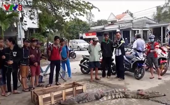 Quảng Nam, Đà Nẵng: Lliên tiếp xuất hiện thương lái bán cá sấu vẫn còn sống ở chợ