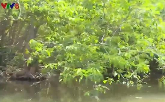 Khám phá rừng Rú Chá ở Thừa Thiên - Huế
