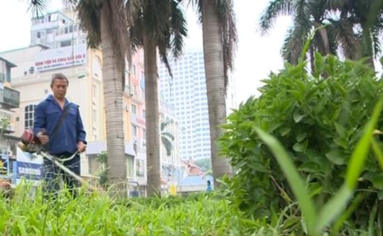 Hà Nội quy định cắt cỏ vườn hoa, công viên 18 lần/năm