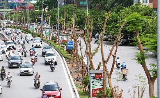 Hà Nội: Rà soát khi di chuyển cây xanh tránh gây lãnh phí