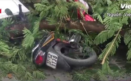 Hà Nội: Cây xanh bất ngờ gãy đổ giữa đường, nhiều người thoát chết