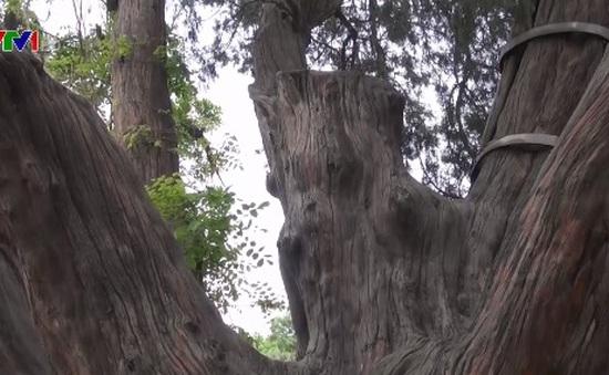 Bắc Kinh: Vườn cổ thụ tại các công viên thu hút du khách