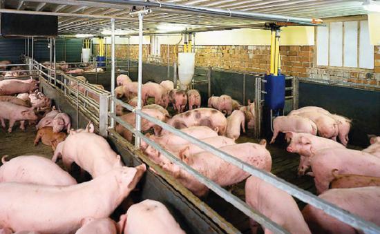 Những điểm cơ bản của dự án Luật Chăn nuôi được trình lên Quốc hội