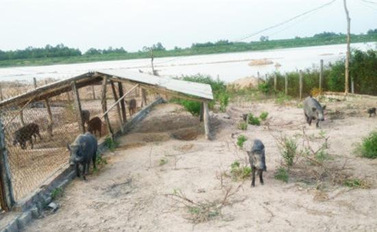 Bà Rịa – Vũng Tàu: Lập trang trại trái phép khiến hồ tưới tiêu bị cạn khô