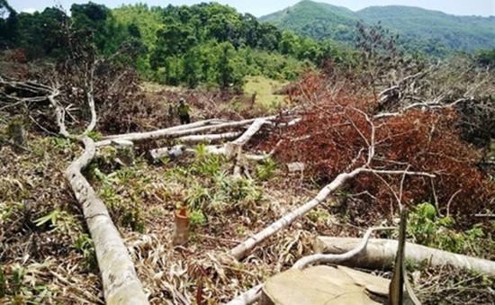 Bình Định quyết tâm làm rõ và xử lý vụ phá rừng tại An Lão