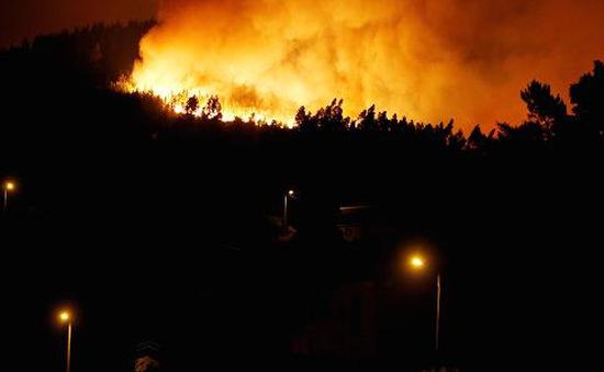 Cháy rừng tại Bolivia khiến hàng chục người thương vong