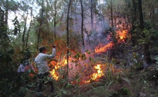 Kịp thời dập tắt vụ cháy rừng lim tại Quỳnh Lập, Nghệ An