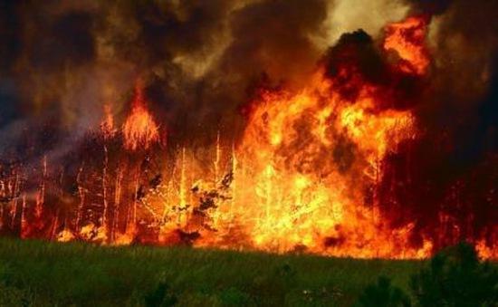Cháy rừng nghiêm trọng tại Mông Cổ
