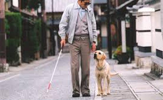Chó dẫn đường – Bạn mới của người khiếm thị tại Hàn Quốc